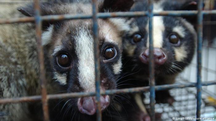 Proposal to ban wildlife meat